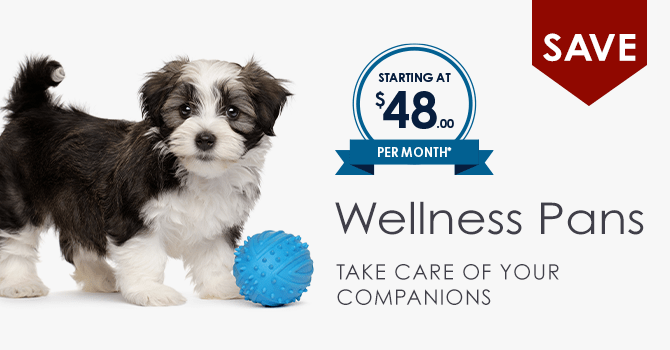 Wellness Plans | Providence Animal Hospital | Charlotte & Waxhaw Veterinarian